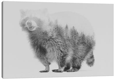 Raccoon I in B&W Canvas Art Print