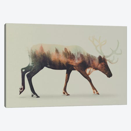 Reindeer Canvas Print #ALE11} by Andreas Lie Canvas Print
