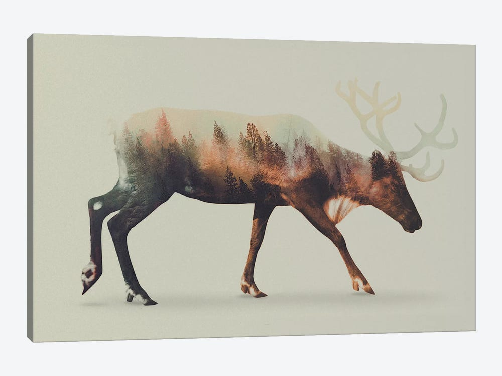 Reindeer by Andreas Lie 1-piece Canvas Print