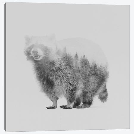 Raccoon II in B&W Canvas Print #ALE120} by Andreas Lie Canvas Wall Art