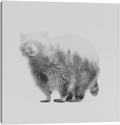 Raccoon II in B&W Canvas Art Print