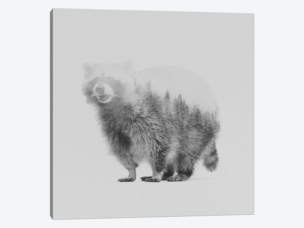 Raccoon II in B&W 1-piece Art Print