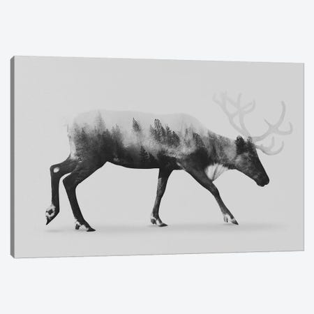 Reindeer  I in B&W Canvas Print #ALE121} by Andreas Lie Canvas Wall Art