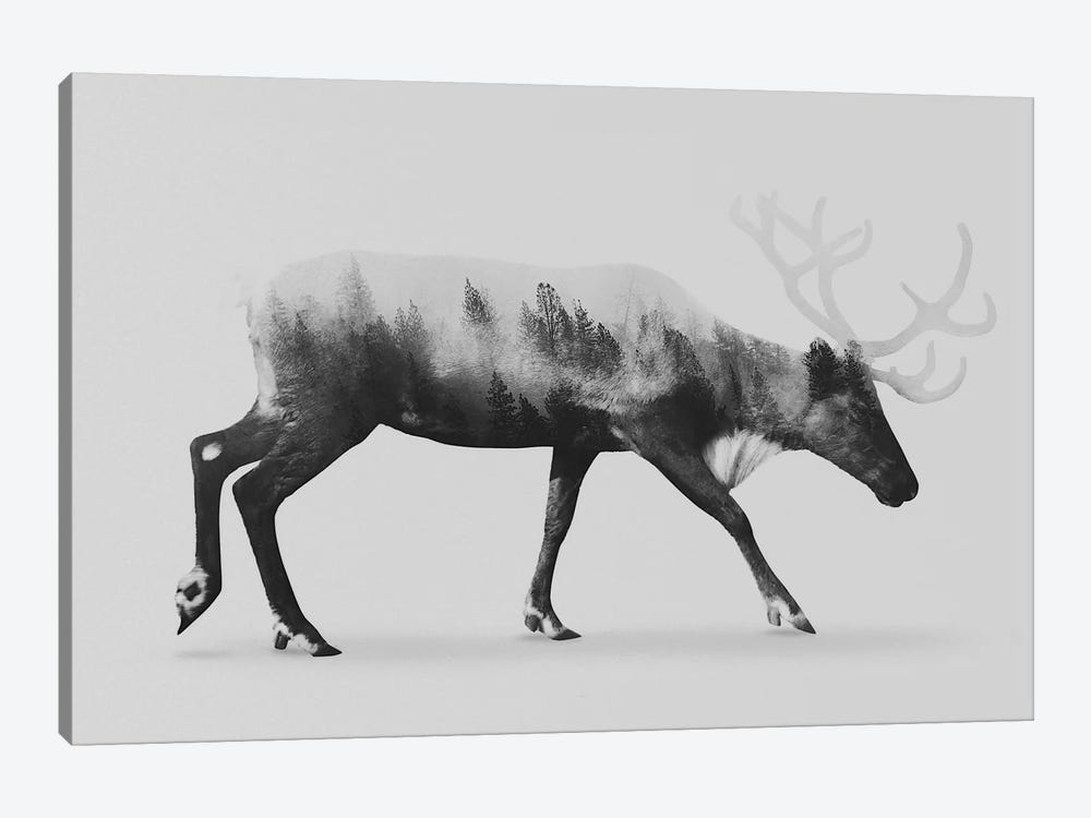Reindeer  I in B&W by Andreas Lie 1-piece Canvas Artwork