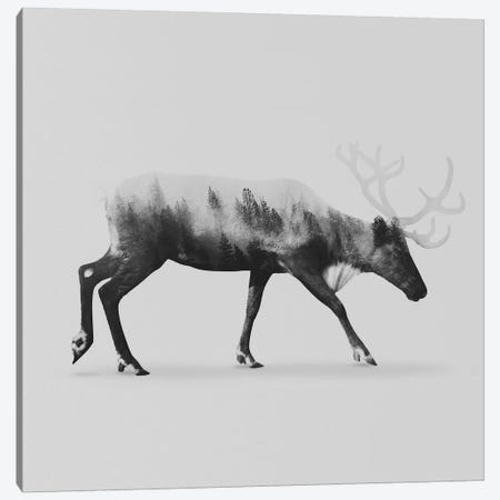 Reindeer II in B&W Canvas Print #ALE122} by Andreas Lie Canvas Art