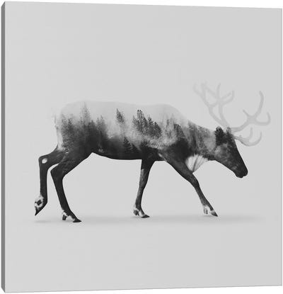 Reindeer II in B&W Canvas Art Print