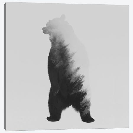 The Bear in B&W Canvas Print #ALE124} by Andreas Lie Canvas Print