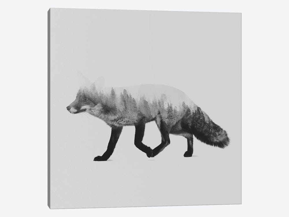 The Fox II in B&W by Andreas Lie 1-piece Canvas Art Print