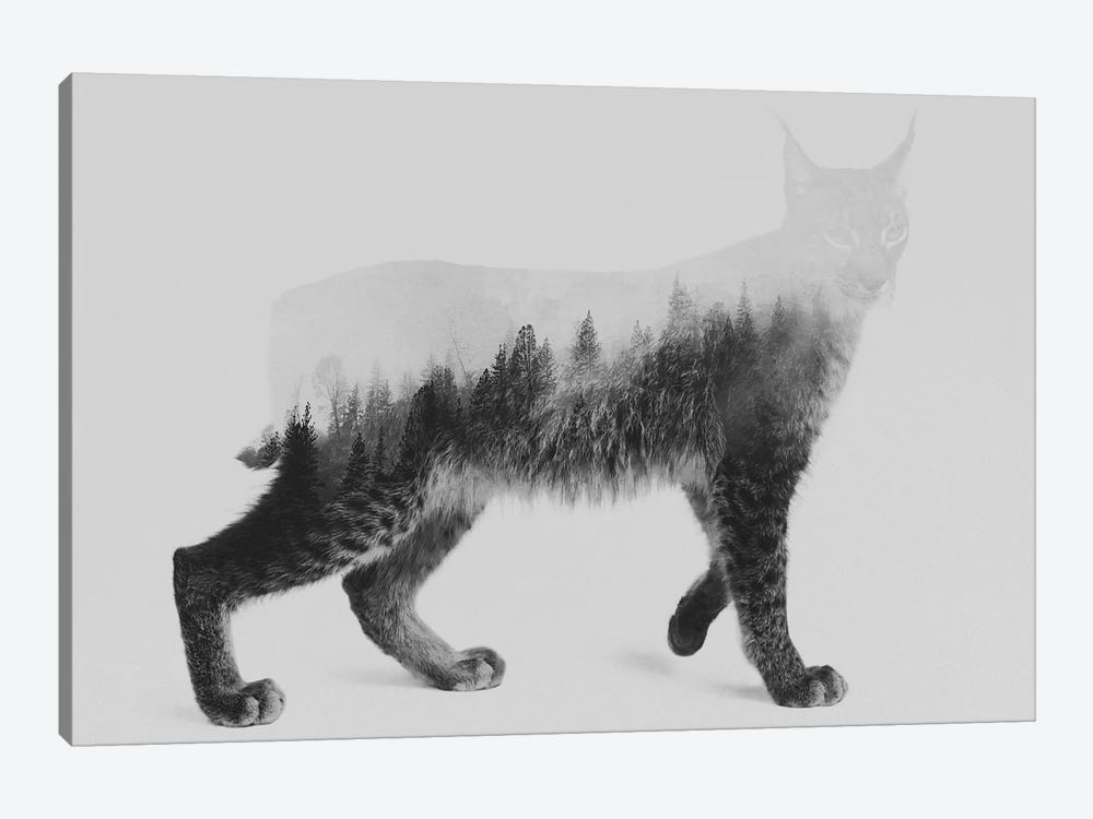Lynx I in B&W by Andreas Lie 1-piece Canvas Wall Art