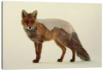 Mountain Fox Canvas Art Print
