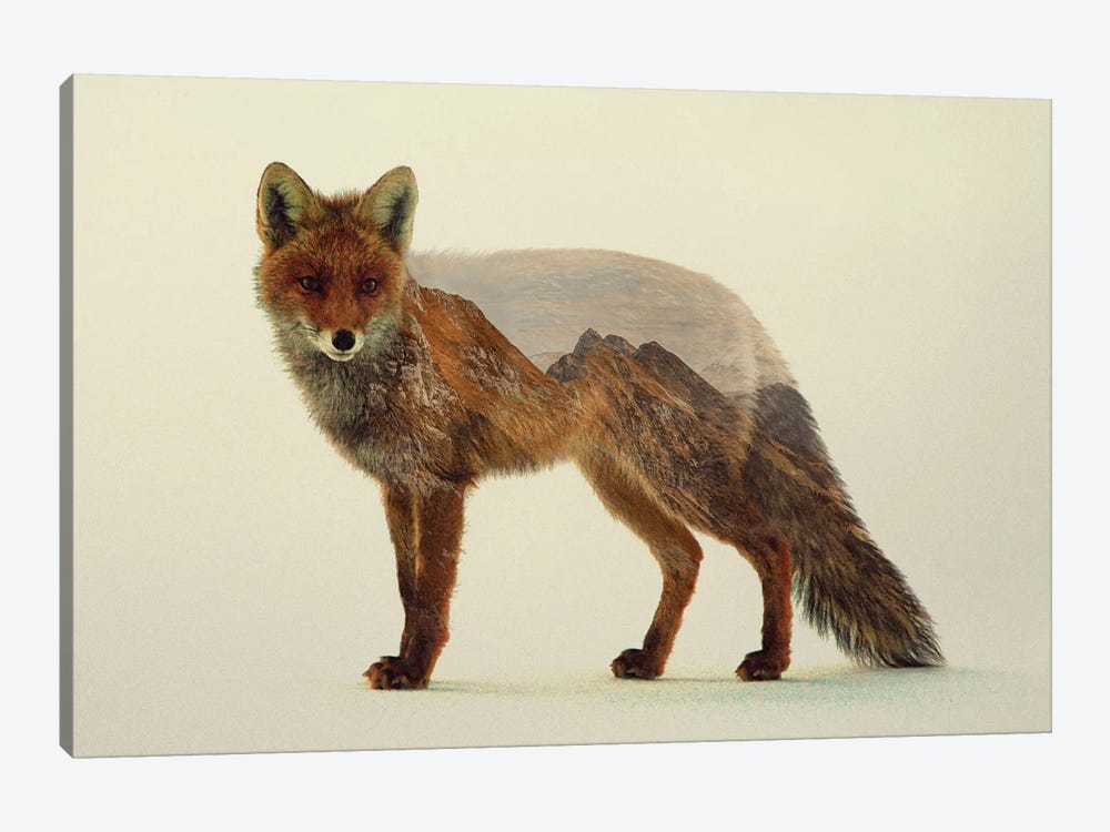 Mountain Fox by Andreas Lie 1-piece Canvas Wall Art
