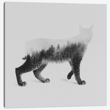 The Lynx in B&W Canvas Print #ALE130} by Andreas Lie Art Print