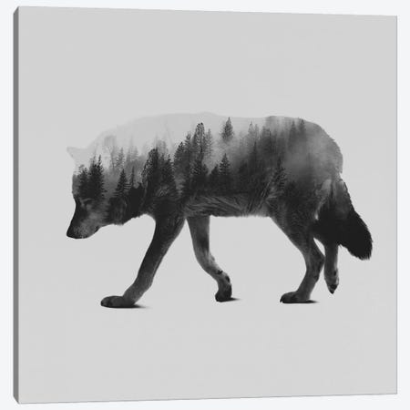 The Wolf II in B&W Canvas Print #ALE134} by Andreas Lie Canvas Artwork