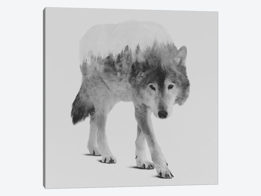 Wolf In The Woods IV in B&W by Andreas Lie 1-piece Canvas Art Print