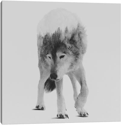 Wolf In The Woods III in B&W Canvas Print #ALE137