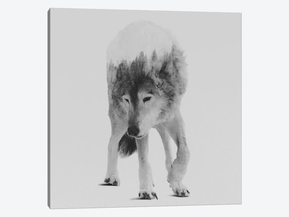Wolf In The Woods III in B&W by Andreas Lie 1-piece Canvas Art Print