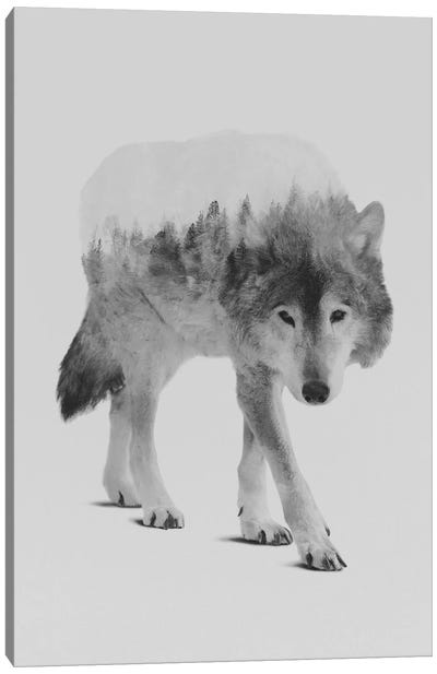 Wolf In The Woods II in B&W Canvas Print #ALE138