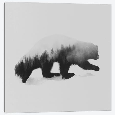 The Wolverine in B&W Canvas Print #ALE140} by Andreas Lie Canvas Art