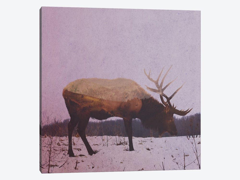 Elk II by Andreas Lie 1-piece Canvas Art Print