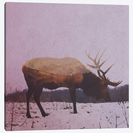 Elk II Canvas Print #ALE142} by Andreas Lie Canvas Art
