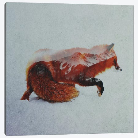 Fox II Canvas Print #ALE143} by Andreas Lie Canvas Wall Art