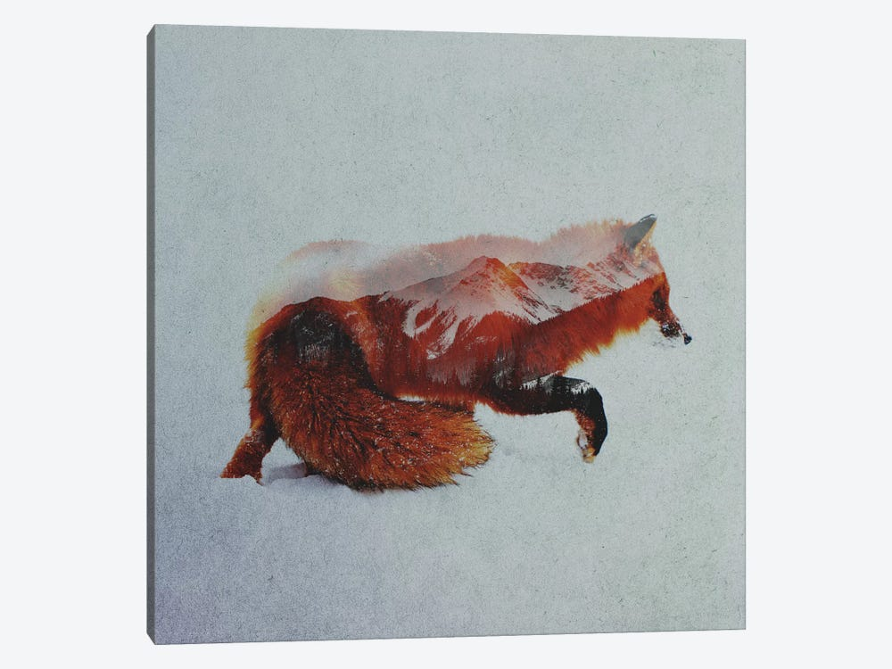 Fox II by Andreas Lie 1-piece Canvas Wall Art