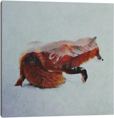 Fox II Canvas Art Print