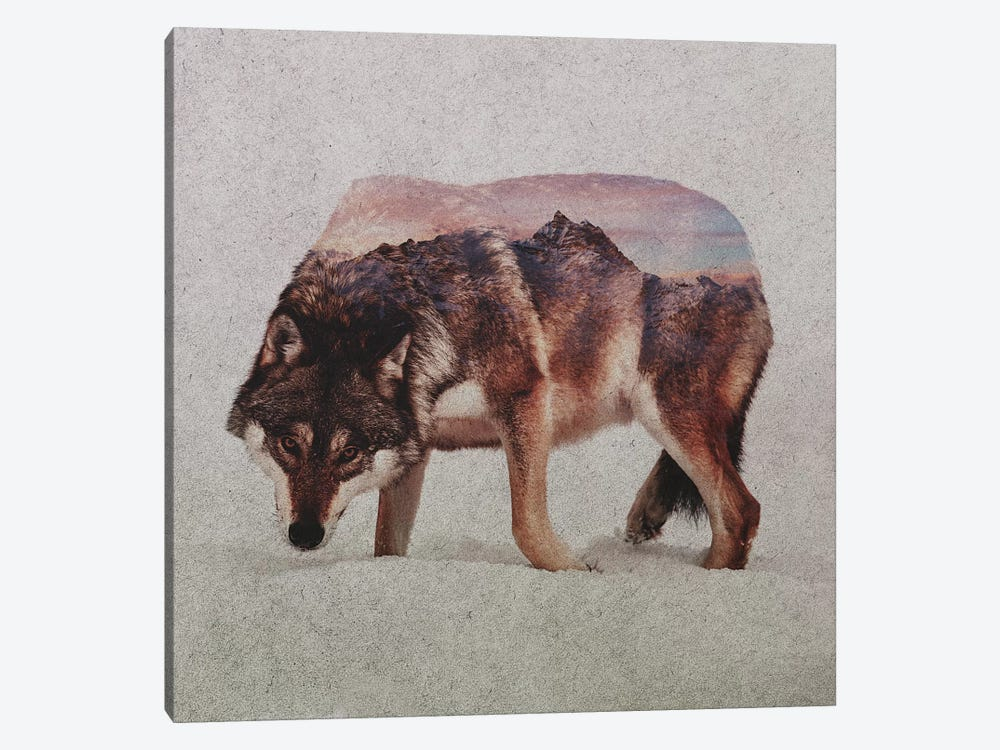 Wolf II by Andreas Lie 1-piece Canvas Wall Art