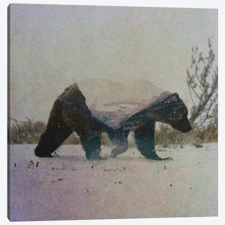 Grizzly Bear Canvas Print #ALE148} by Andreas Lie Canvas Artwork