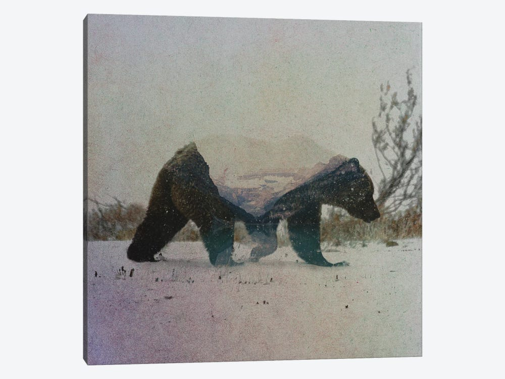 Grizzly Bear by Andreas Lie 1-piece Canvas Art Print
