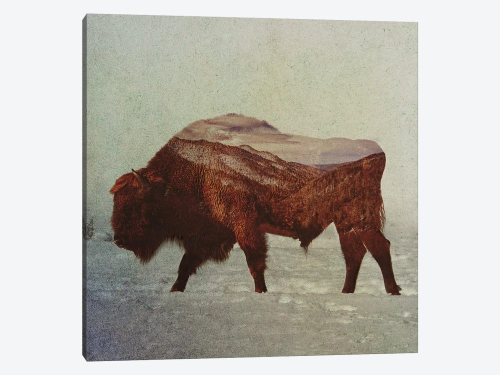 Bison II by Andreas Lie 1-piece Canvas Art