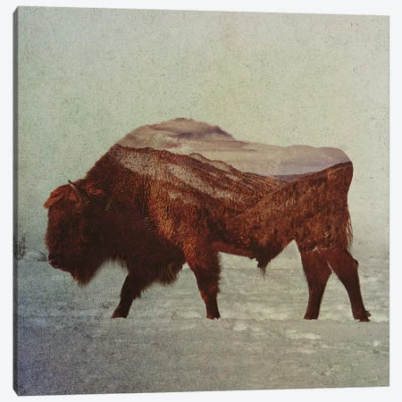 Bison II Canvas Print #ALE149} by Andreas Lie Canvas Artwork