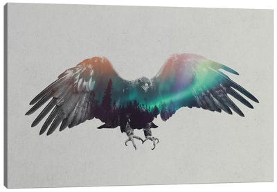 Aurora Borealis Series: Eagle Canvas Print #ALE152