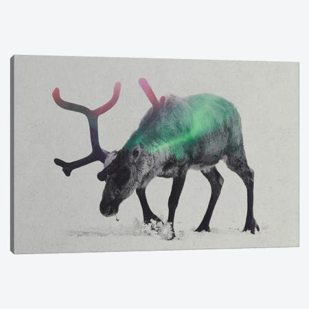 Aurora Borealis Series: Reindeer Canvas Print #ALE158} by Andreas Lie Canvas Print