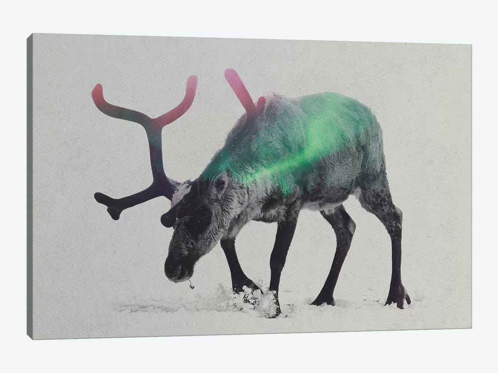 Reindeer by Andreas Lie 1-piece Canvas Wall Art