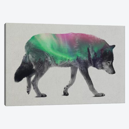 Aurora Borealis Series: Wolf Canvas Print #ALE159} by Andreas Lie Art Print