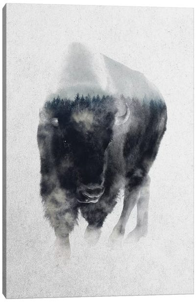 Bison In Mist Canvas Art Print