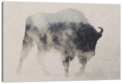 Bison In The Fog Canvas Art Print