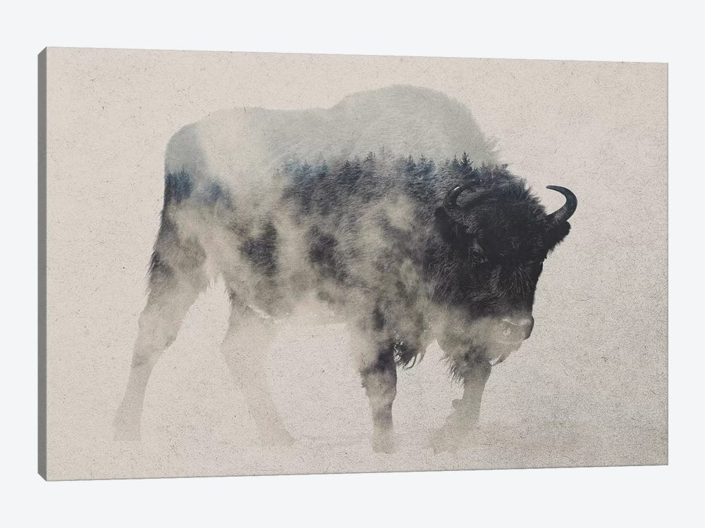 Bison In The Fog by Andreas Lie 1-piece Canvas Art Print