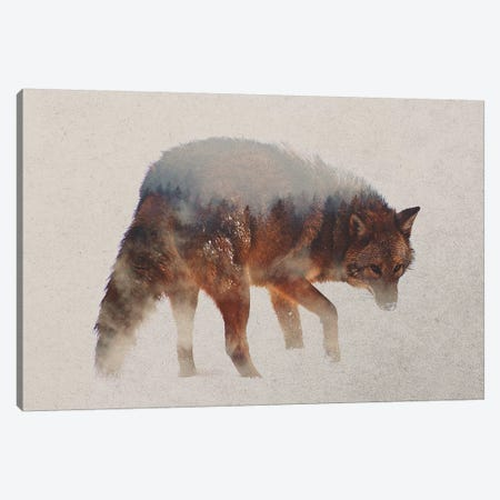 Coyote In The Fog Canvas Print #ALE167} by Andreas Lie Canvas Print