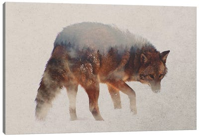 Coyote In The Fog Canvas Art Print