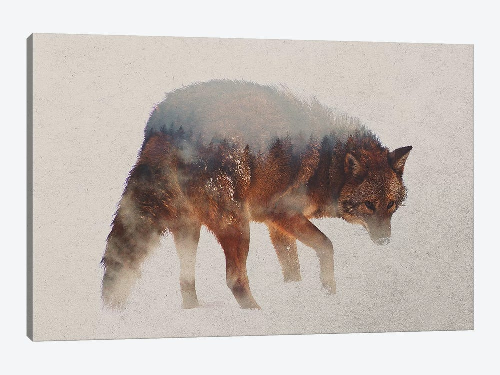 Coyote In The Fog by Andreas Lie 1-piece Canvas Art