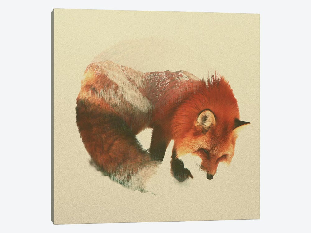 Snow Fox by Andreas Lie 1-piece Canvas Art