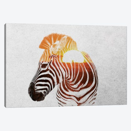 Zebra II Canvas Print #ALE174} by Andreas Lie Canvas Artwork
