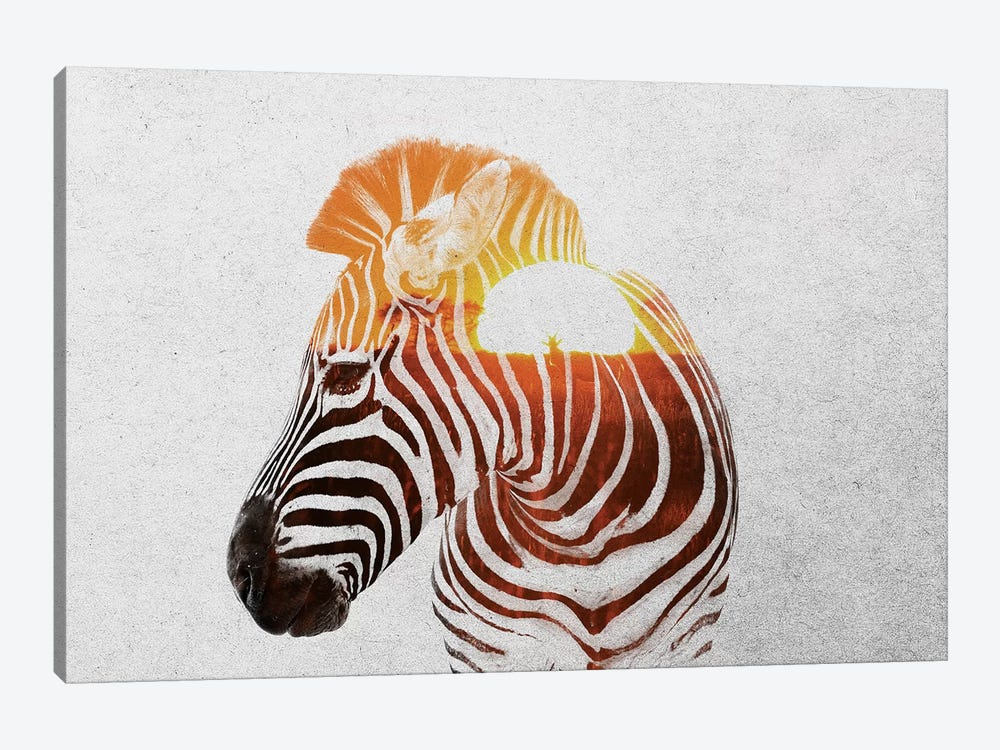 Zebra II by Andreas Lie 1-piece Canvas Artwork
