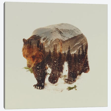 Bear I Canvas Print #ALE17} by Andreas Lie Canvas Artwork