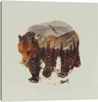 Bear I Canvas Art Print