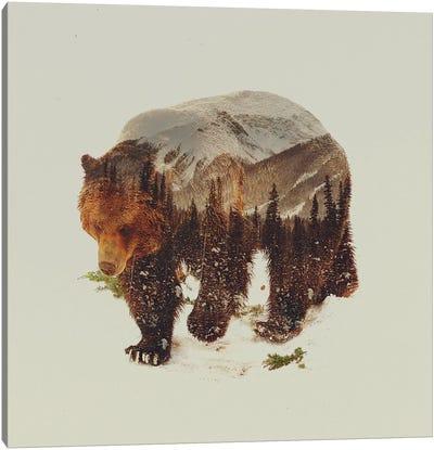 Bear I Canvas Art Print