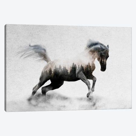 Hest I Canvas Print #ALE184} by Andreas Lie Art Print
