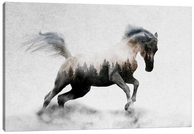 Hest I Canvas Art Print